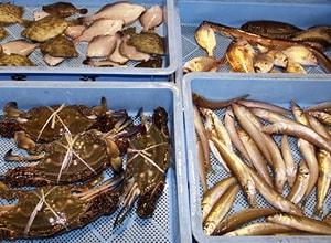 泉州で獲れる水産物