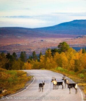フィンランドには、実は秋があります
