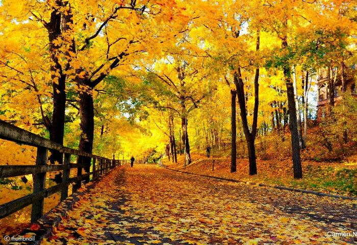 フィンランドからお届けします -フィンランド人に聞くフィンランドのライフスタイル 〈フィンランド人直伝〉秋のフィンランドの楽しみ方