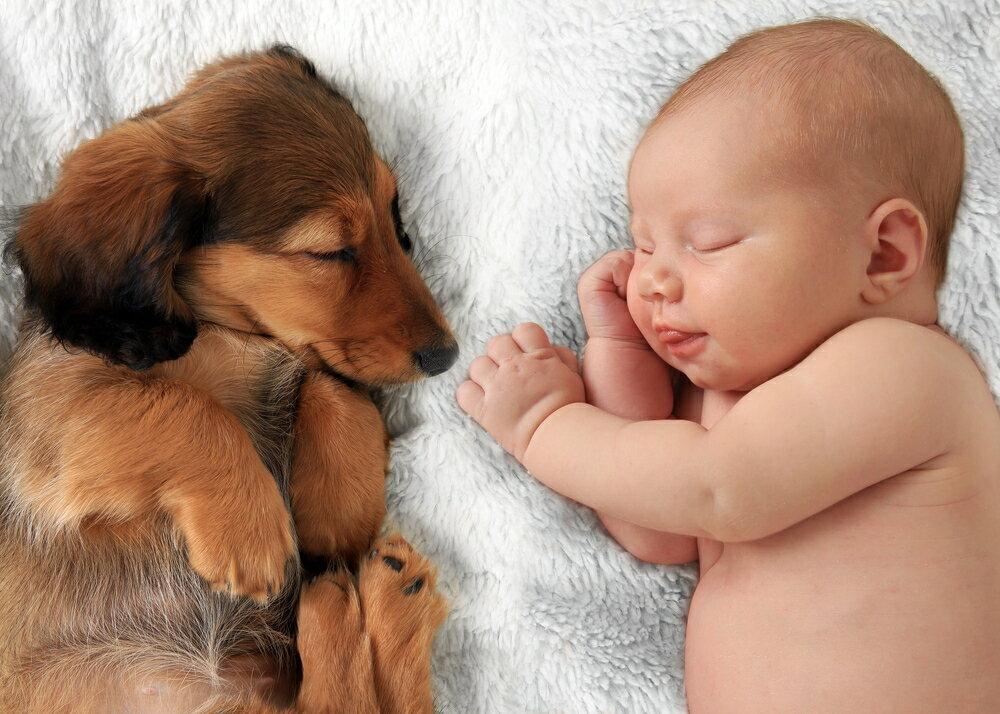 赤ちゃんと犬が一緒に暮らすためのしつけポイント
