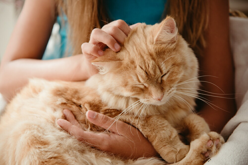 高齢猫がストレス無く過ごせる暮らし方