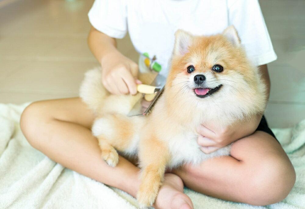 犬のノミ・ダニを効果的に対策する方法やおすすめグッズ