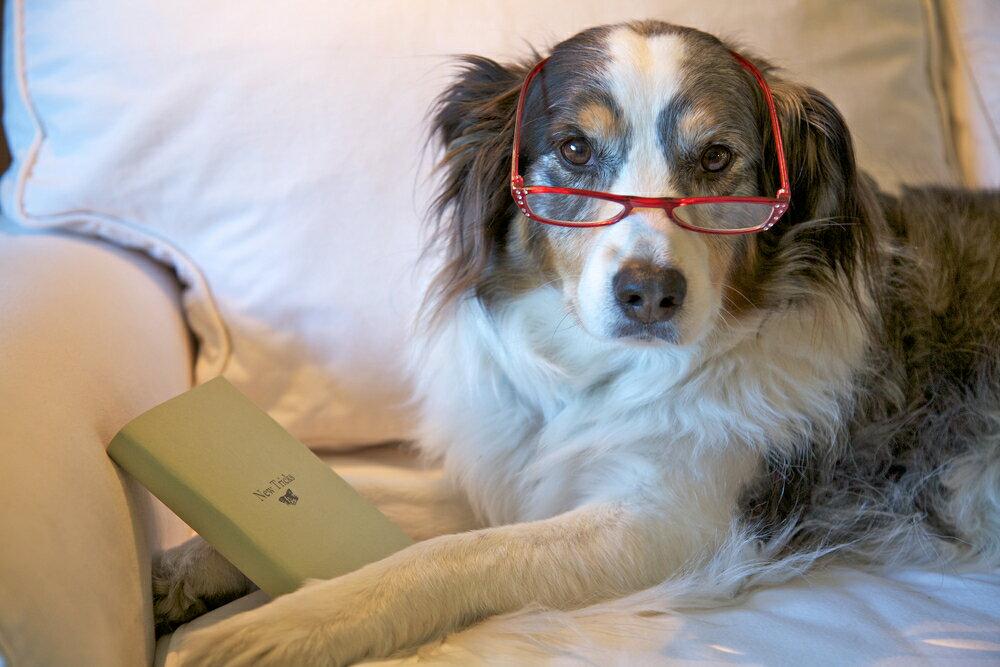 高齢犬が健やかになる暮らし方のポイント