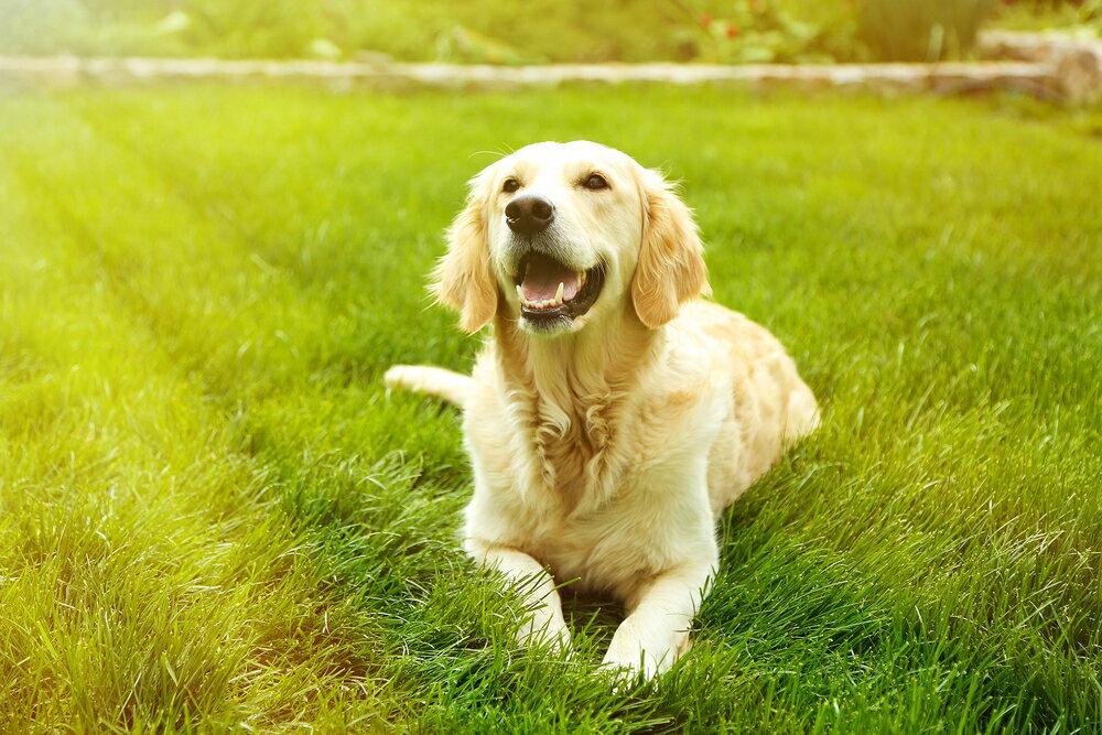 犬と一緒に遊ぶおすすめおもちゃ