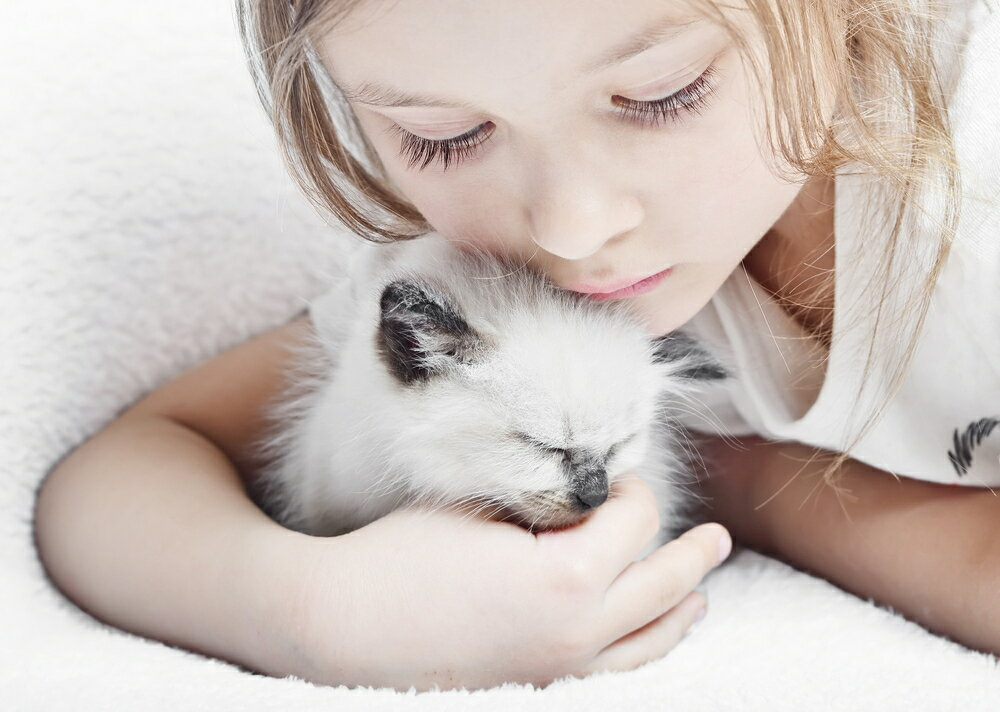 子供がいる方におすすめの猫の選び方や猫の種類