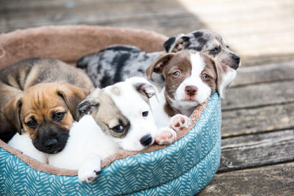 子供がいる方へ犬種の選び方のアドバイス