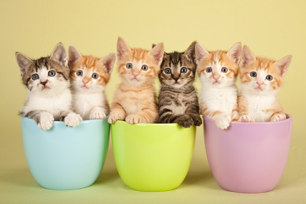 種類別の猫の選び方アドバイス