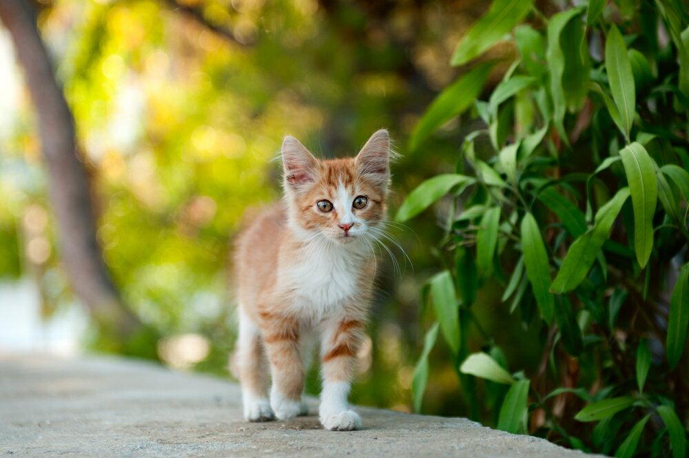 猫と外で遊ぶために必要なお出かけグッズ