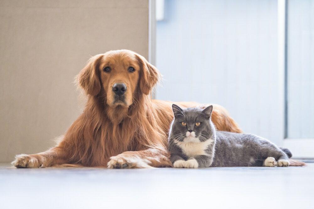 共働きでも飼いやすいおすすめのペットとは?