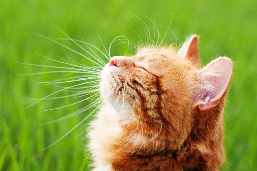 ペットは犬猫どっちがおすすめ?失敗しないペットの選び方