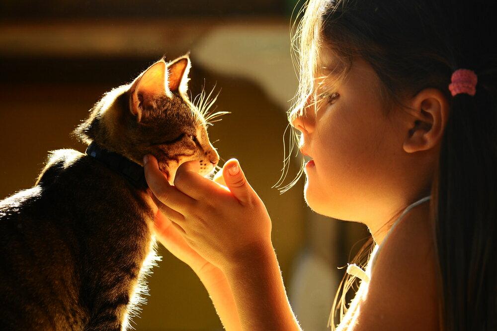 子供が猫と触れ合えるお出かけスポット