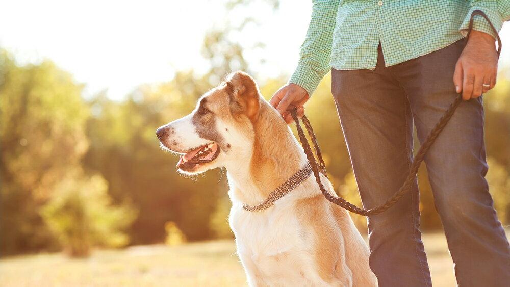 犬と遊びたい方におすすめの犬種の選び方