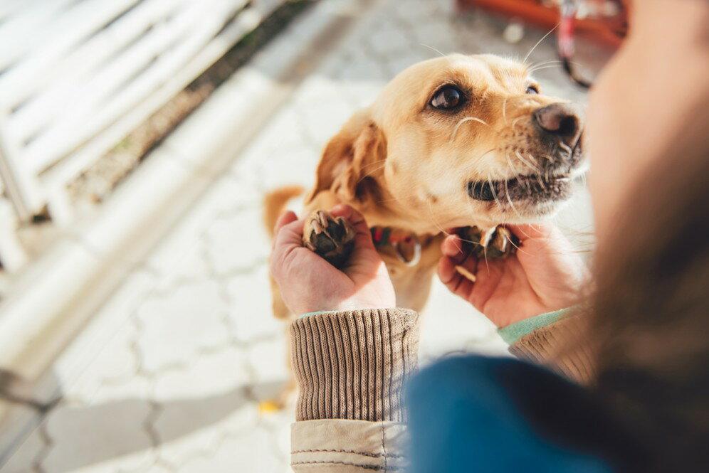 犬に癒されたい方におすすめの犬種の選び方とは?