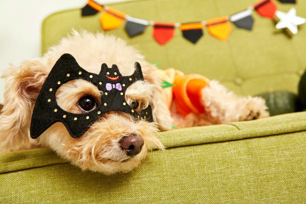 犬好きスタイリストが教える! 愛犬のハロウィンコスプレコーディネート術