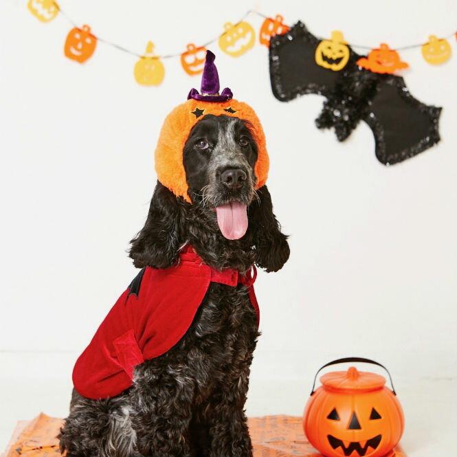 愛犬が嫌がらないハロウィンコスプレ衣装の…