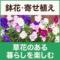 夏を彩る鉢花寄せ植え観葉植物