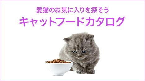 愛猫のお気に入りフードを探そう!