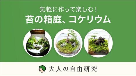 気軽に作って楽しむ!苔の箱庭、コケリウム