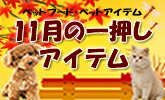 11月のイチオシ商品をご紹介!