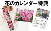 【敬老の日特集】Fleur Town 吉本花城園