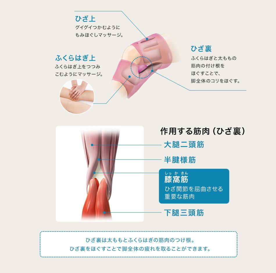 ひざ上 グイグイつかむようにもみほぐしマッサージ。 ひざ裏 ふくらはぎと太ももの筋肉の付け根をほぐすことで、脚全体のコリをほぐす。 ふくらはぎ上 ふくらはぎ上をつつみこむようにマッサージ。 作用する筋肉(ひざ裏) 大腿二頭筋 半腱様筋 膝窩筋しっかきん ひざ関節を屈曲させる重要な筋肉 下腿三頭筋 ひざの裏は太ももとふくらはぎの筋肉のつけ根。ひざ裏をほぐすことで脚全体の疲れを取ることができます。