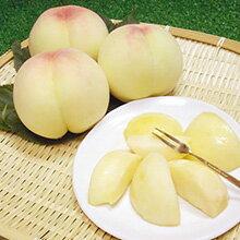 岡山産 白桃 クイーン1.5kg箱