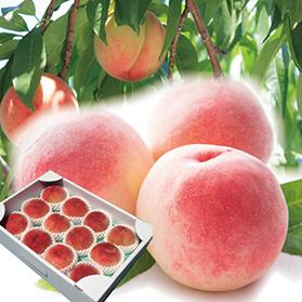 献上桃の郷の特秀桃 3kg