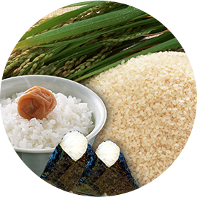 コシヒカリ白米
