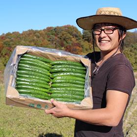 農家直送 大内ファームもぎたて新鮮きゅうり A級品1kg