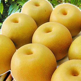 福島の梨 5kg箱(12〜18玉入)