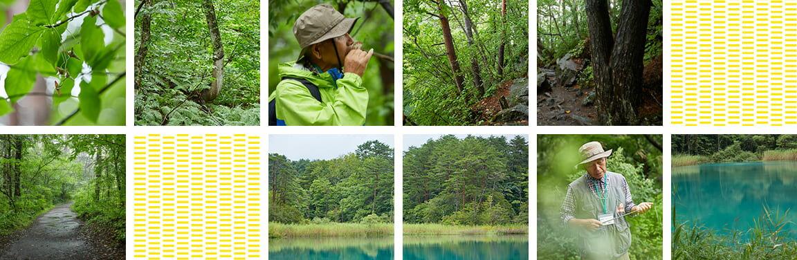 五色沼の美しい色彩
