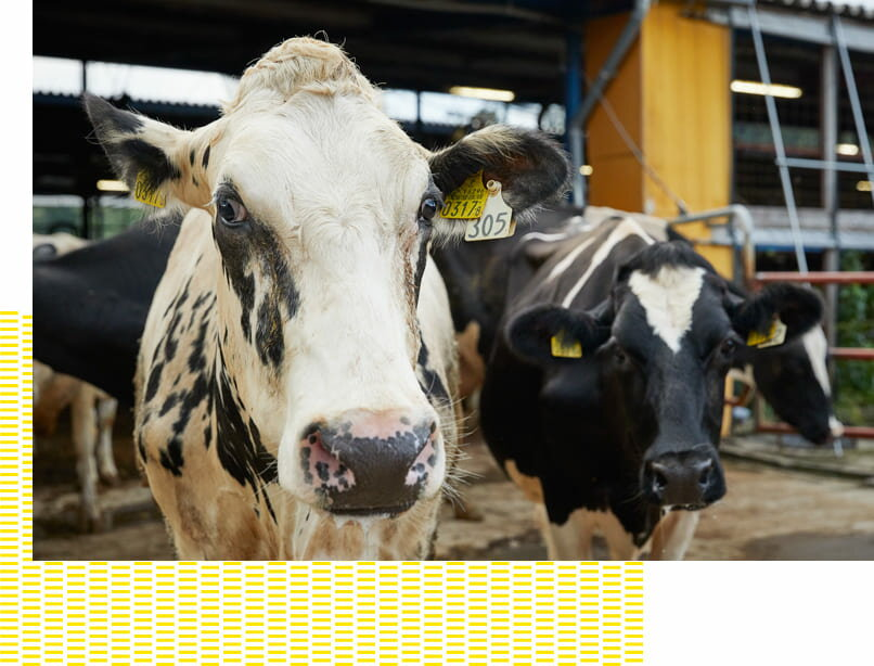 生乳は、福島県内の約200軒の契約牧場が生産