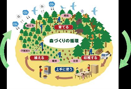 図解:森づくりの循環