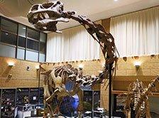 甑ミュージアム恐竜化石等準備室