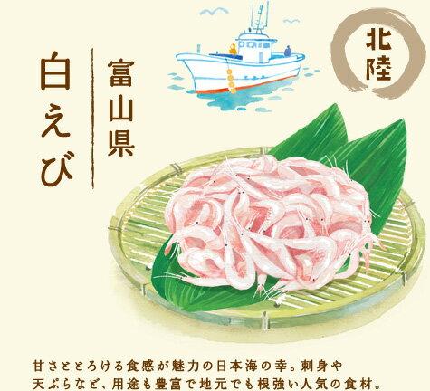 【北陸 富山県 富山 白えび】甘さととろける食感が魅力の日本海の幸。刺身や天ぷらなど、用途も豊富で地元でも根強い人気の食材。