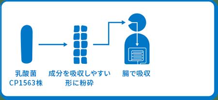 乳酸菌CP1563株 → 成分を吸収しやすい形に粉砕 → 腸で吸収