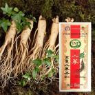 【高麗人参茶GOLD】【木箱】100包x1箱