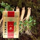 【高麗人参茶GOLD】【紙箱】100包x2箱