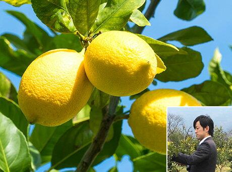 PENTA FARM 大亀剛志さんのレモン 2kg