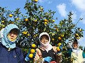 幻の果実「じゃばら」が自生する、日本唯一の飛び地村