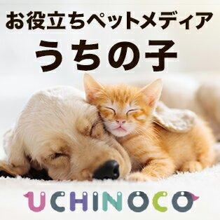 【UCHINOCO】大事なワンちゃんネコちゃんお役立ちペットメディア『うちの子』