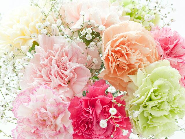 定番のカーネーション、花言葉の意味は?