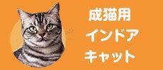 成猫用インドアキャット