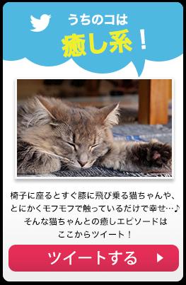 【うちのコは癒し系!】椅子に座るとすぐ膝に飛び乗る猫ちゃんや、とにかくモフモフで触っているだけで幸せ…♪そんな猫ちゃんとの癒しエピソードはここからツイート! →ツイートする