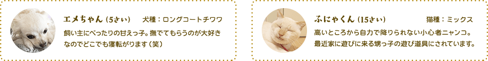 エメちゃん(5さい)犬種:ロングコートチワワ飼い主にべったりの甘えっ子。 撫でてもらうのが大好きなのでどこでも寝転がります(笑)ふにゃくん(15さい)猫種:ミックス高いところから自力で降りられない小心者ニャンコ。最近家に遊びに来る甥っ子の遊び道具にされています。
