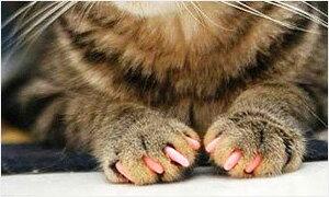 猫用ソフトネイルキャップ