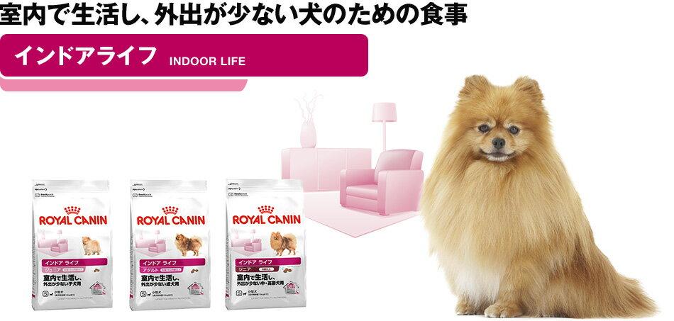 """""""室内で生活し、外出が少ない犬のための食事"""