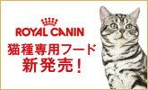 ROYAL CANIN猫種専用フード新発売!