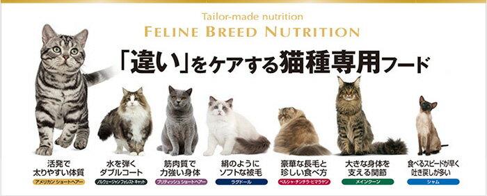 FELINE BREED NUTRITION「違い」をケアする猫種専用フード