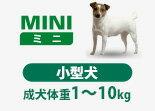 Miniの愛犬